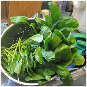 photo credit: Pile o' spinach via photopin (license)